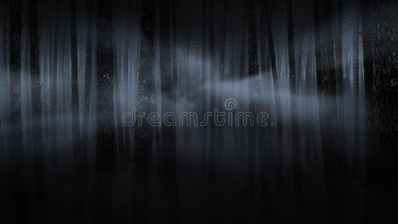 Download Foggy forest at night stock image. Image of mood, forest - 25665431