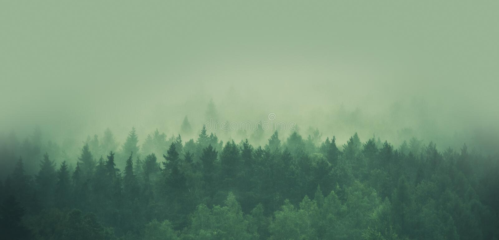 Foggy Forest Panorama royalty free stock photo