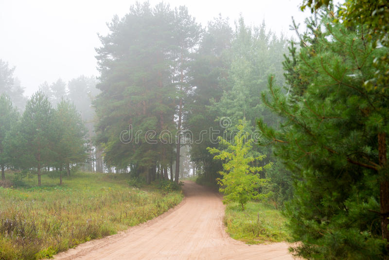 Foggy forest and road stock images