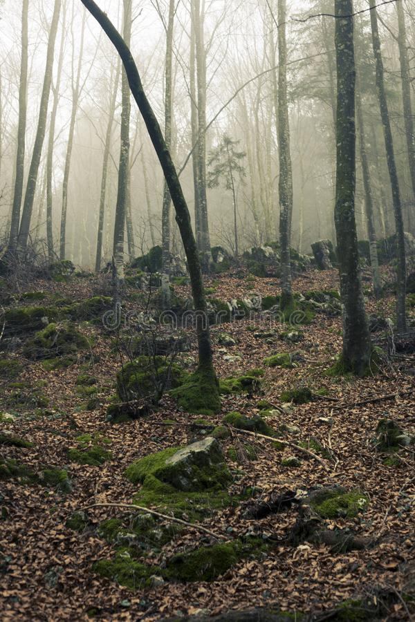 Foggy Forest With Stones Under Sunset stock photo