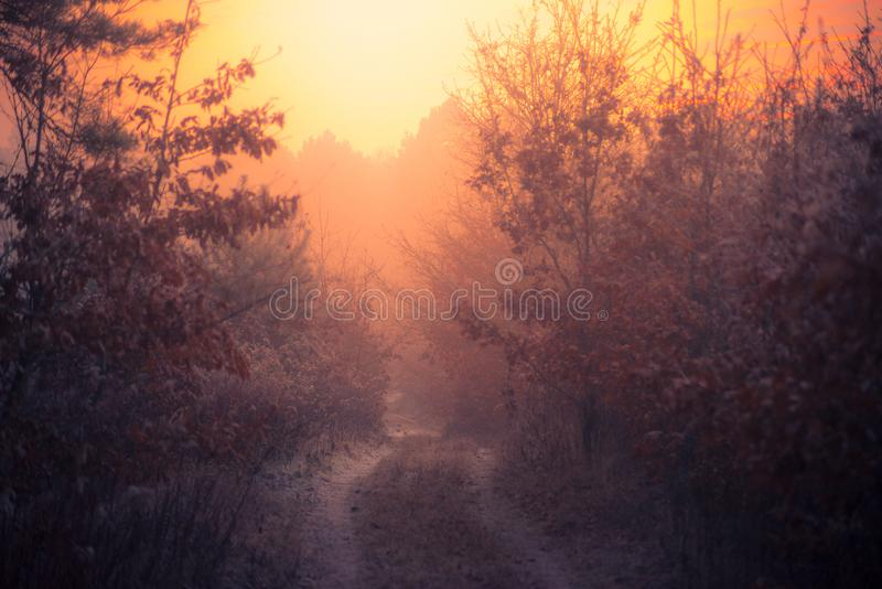 Foggy and frosty winter forest with foot path at sunset time. stock photos