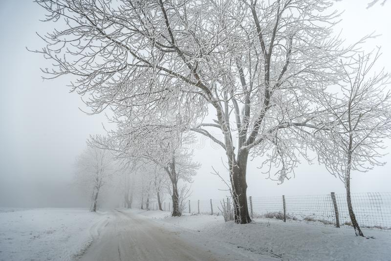 Foggy / frosty winter road with trees royalty free stock images