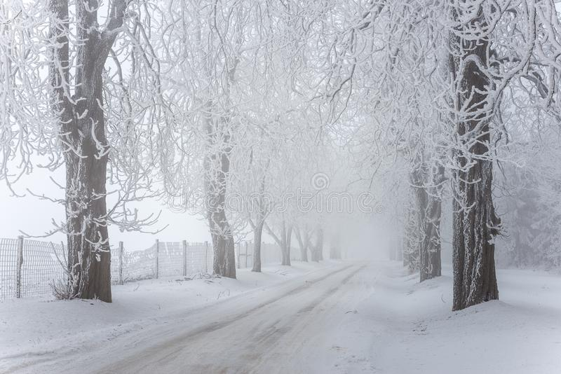 Foggy / frosty winter road with trees royalty free stock photo
