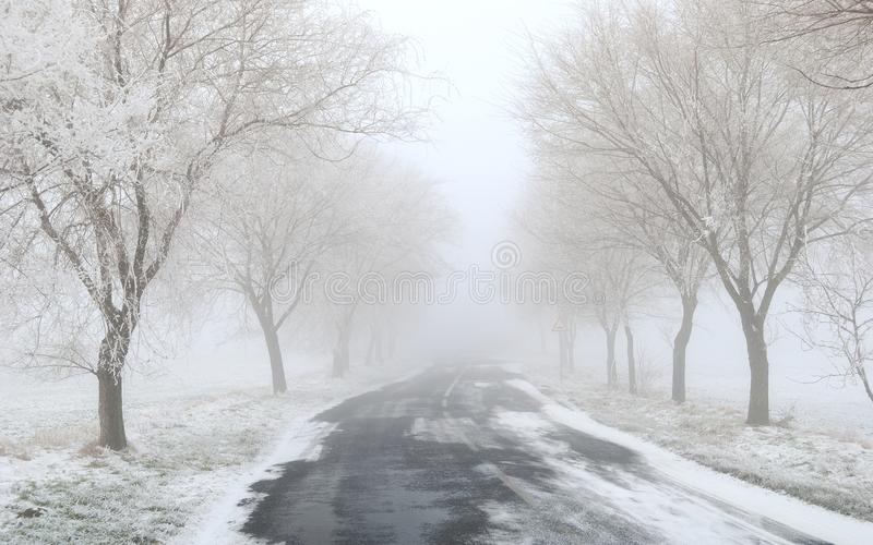 Foggy / frosty winter road with trees royalty free stock photos