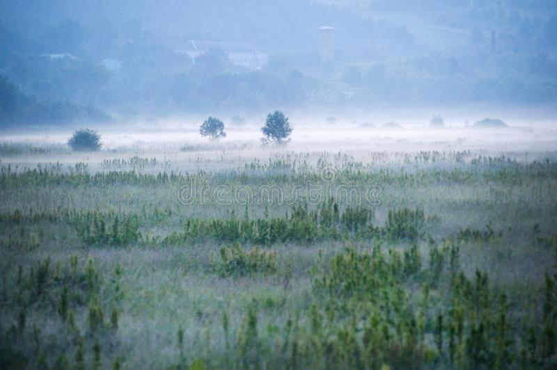 Foggy Green Field royalty free stock photography