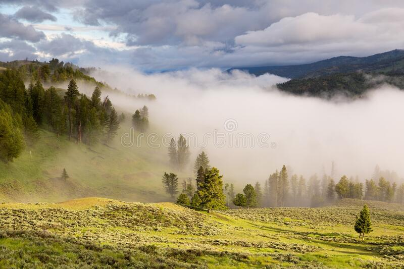 Foggy Green Landscape With Pine Forest at Daytime stock photos