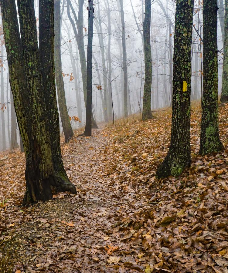 Foggy Hiking Trail in the Mountains of Virginia, USA. A foggy mountain hiking trail located in the Blue Ridge Mountains of Virginia, USA royalty free stock photography