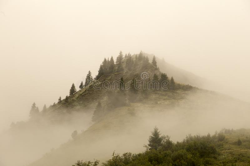 Foggy Hilltop. A hilltop in the alps overgrown with conifers, shrouded in fog royalty free stock image