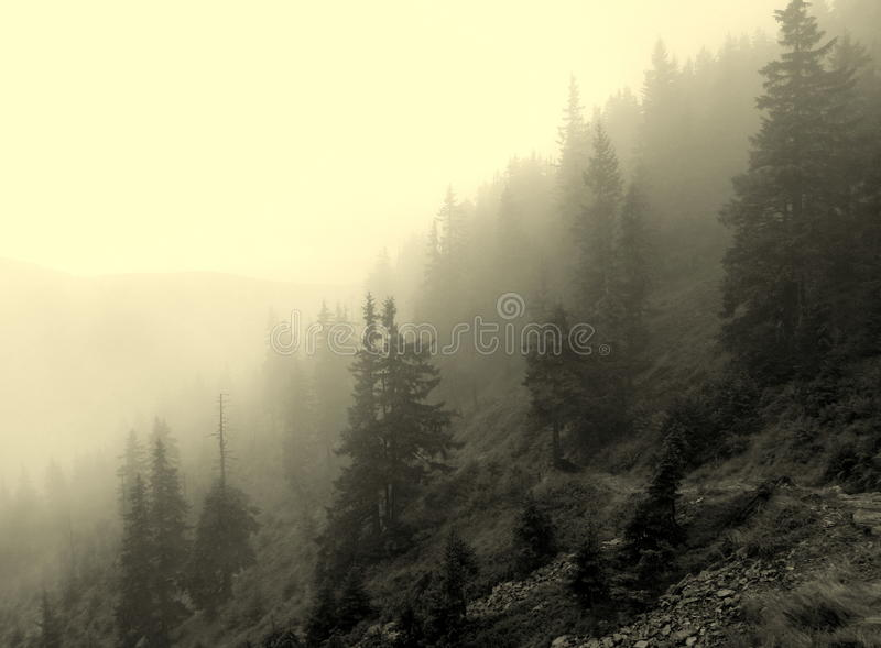 Foggy horizon. Mystical and foggy horizon on the way to the top of the mountain royalty free stock image