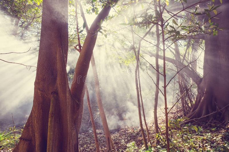 Foggy jungle. Serenity Cloud forest in Costa Rica stock photography