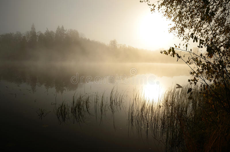Download Foggy lake stock image. Image of landscape, late, nature - 21984509