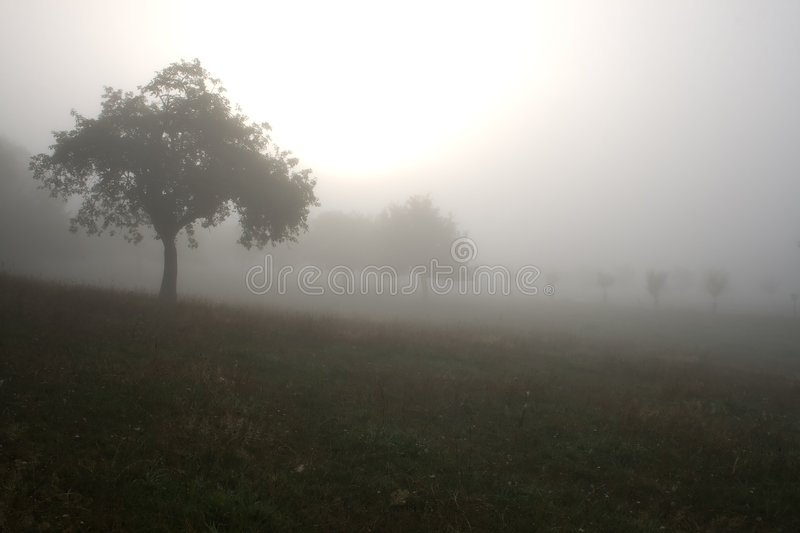 Download Foggy landscape stock photo. Image of mist, forest, scenics - 3003474
