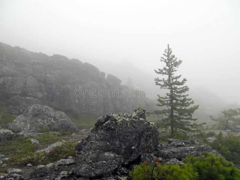 Mountain tundra in a fog. Foggy landscape of a high mountain plateau with boulders and tundra vegetation while in the cloud royalty free stock photo