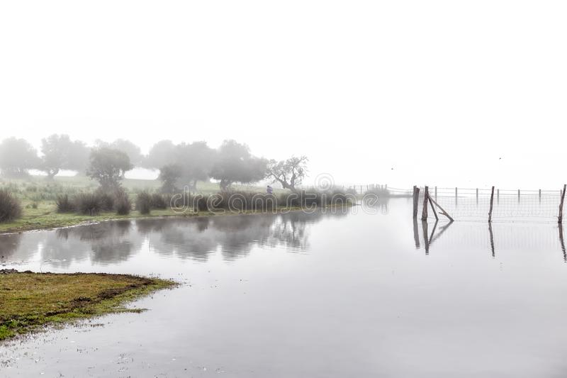 Foggy landscape in Marshes of Doñana National Park. Spain. Wood in water and woman in the distance taking pictures royalty free stock photo