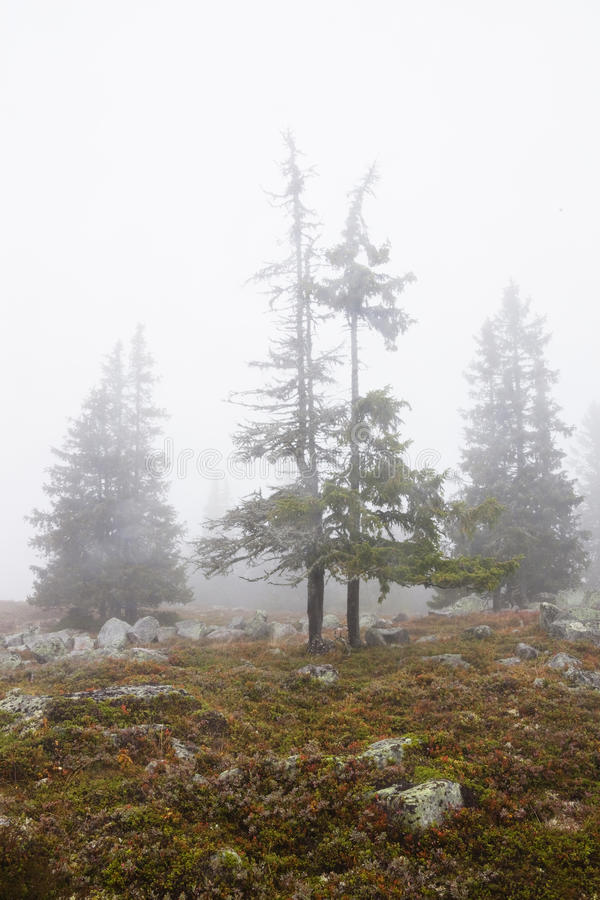 Download Foggy Landscape With Trees In Fall Stock Photo - Image: 19981314