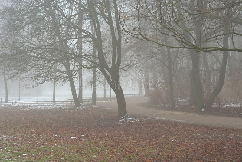 Download Foggy Lane stock image. Image of path, frosty, autumn - 7505211