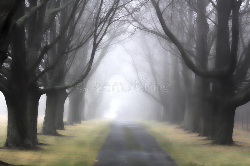 Foggy Lane 3. Foggy Day North Fork of Long Island New York stock images