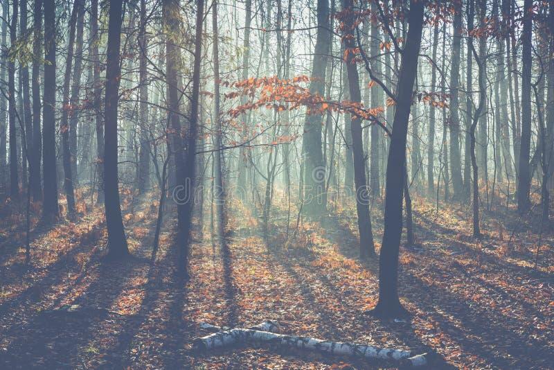 Foggy mörkvinterskog i Polen royaltyfri fotografi