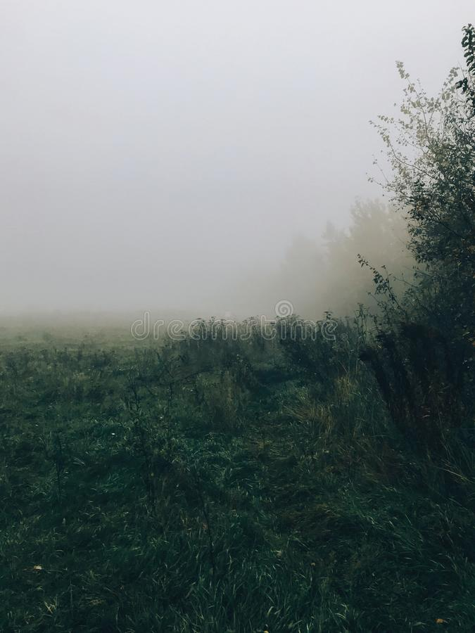 Foggy meadow in cold autumn morning. Mist in field. Tranquil moment. Hello fall. Autumn background. Atmospheric morning royalty free stock photo
