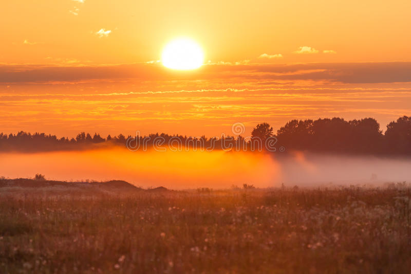 Foggy meadow at sunset. With forest at background royalty free stock image