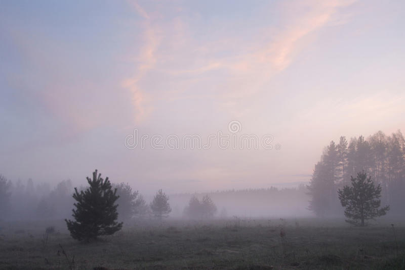 Foggy meadow after sunset. Summer landscape royalty free stock image