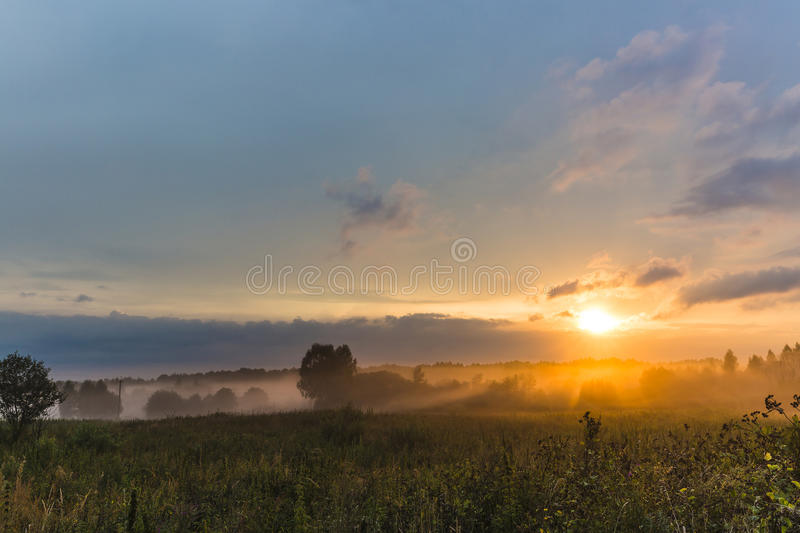 Foggy meadow with trees at sunset with cloudy sky.  stock photos