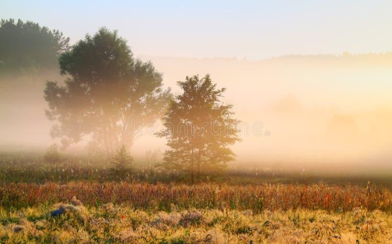 Foggy morning stock image