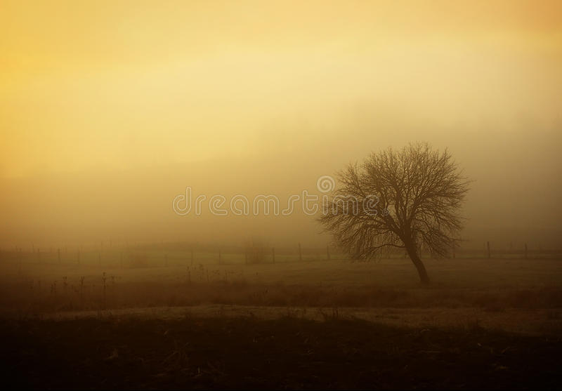 Download Foggy morning stock image. Image of mystery, scene, leaf - 25162797