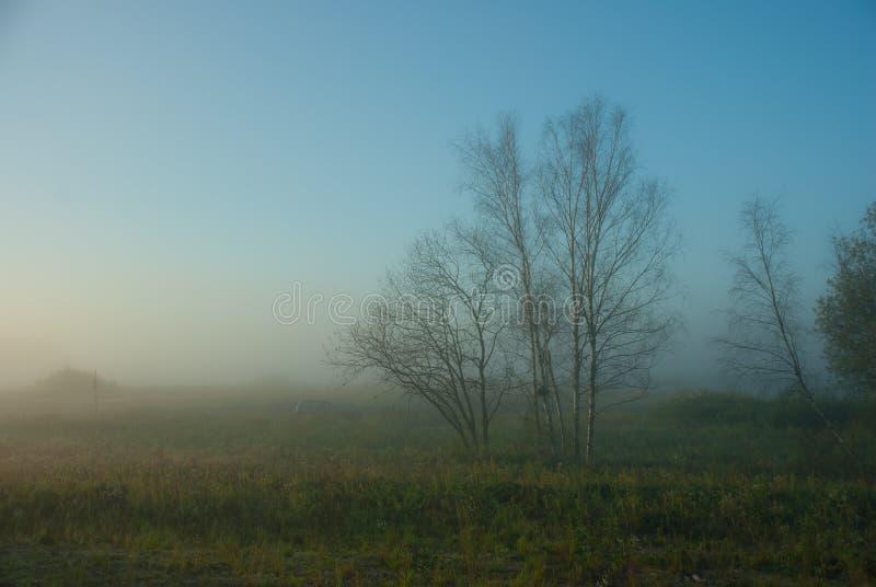 Download Foggy morning stock photo. Image of dense, calm, morning - 26830148