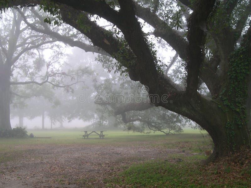 Foggy Morning royalty free stock photos