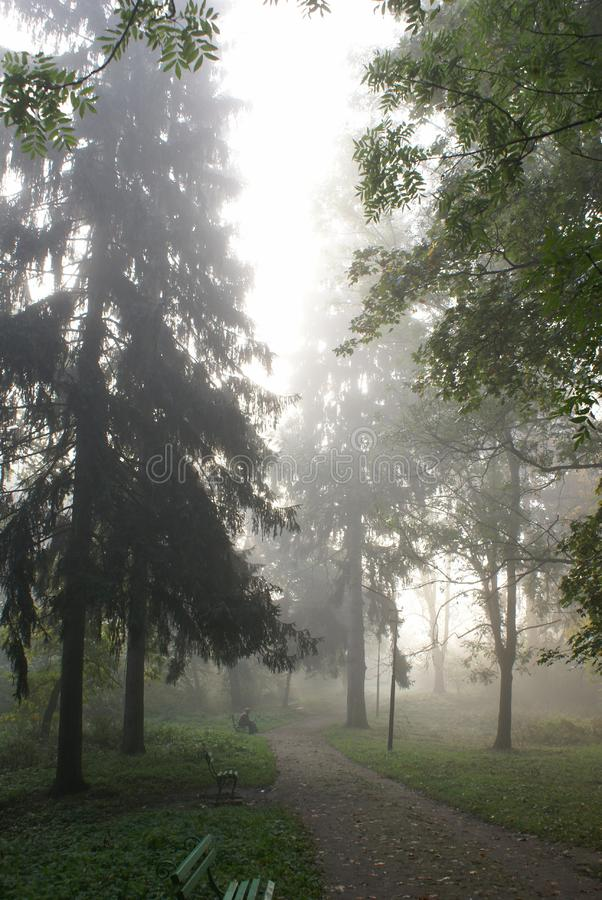 Download Foggy morning stock photo. Image of outdoors, enchanted - 3460274