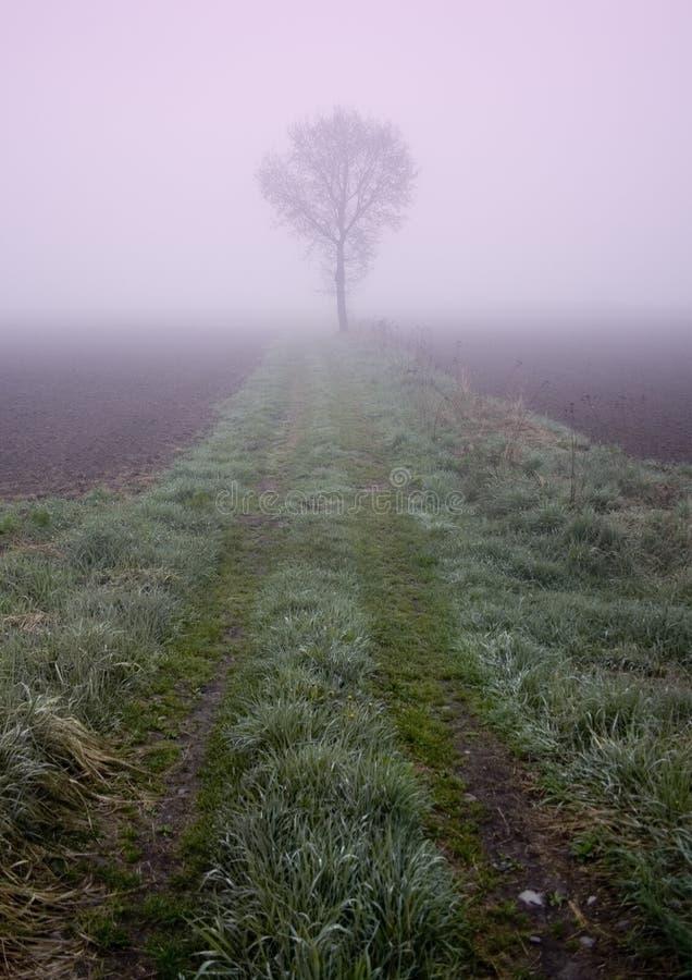 Free Foggy Morning Stock Photography - 8771132