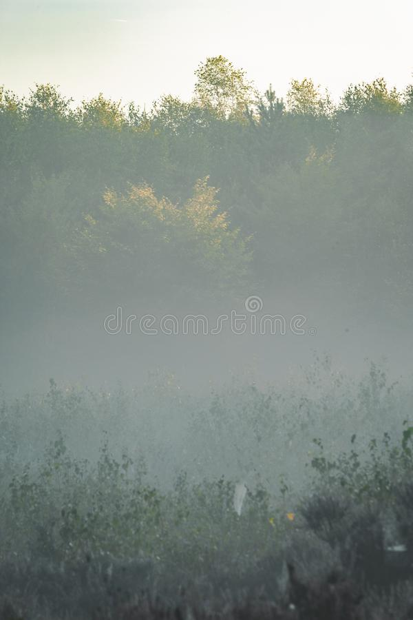 Foggy morning in the Amerongse Bos with distant trees barely visible. Mist rolling in over grasses stock image