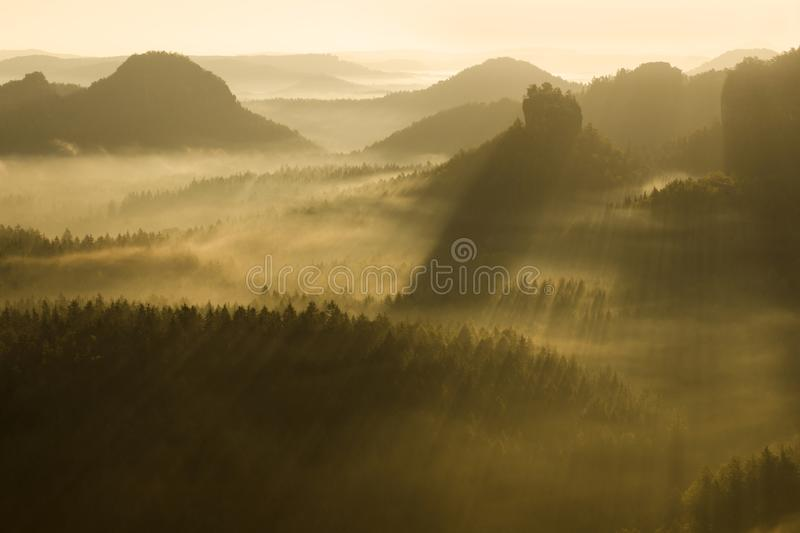 Foggy morning in a Czech republic. Golden rays on are shining at the forest. Nature background early morning. Foggy morning in a Czech republic. Golden rays on stock images