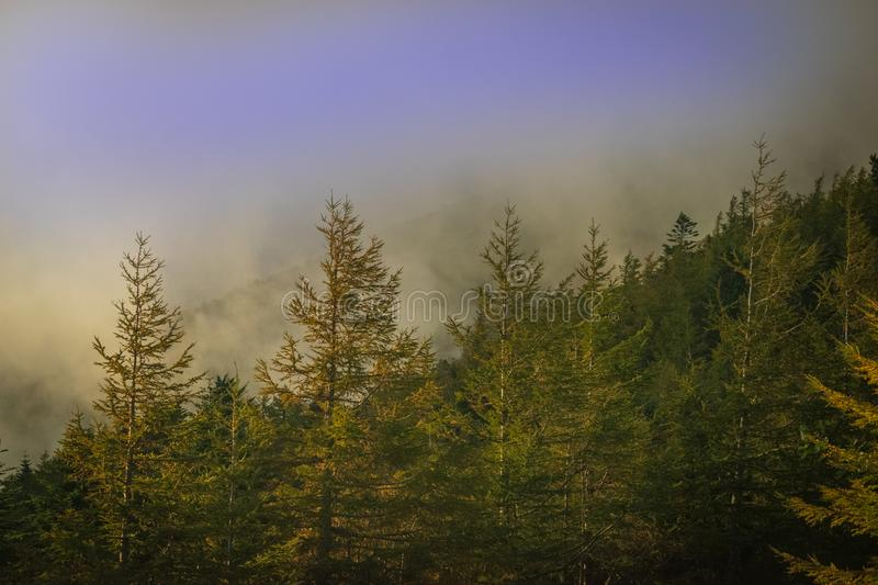 Foggy morning in the for mountain. Fog forest mountain cloud nature morning wood japan fuji what vibes quiet trip royalty free stock image