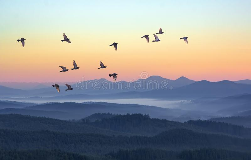 Foggy morning in the mountains with flying birds over silhouettes of hills. Serenity sunrise with soft sunlight and layers of haze. Mountain landscape with stock image