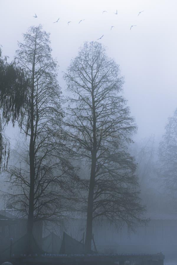 Fog morning stock photo