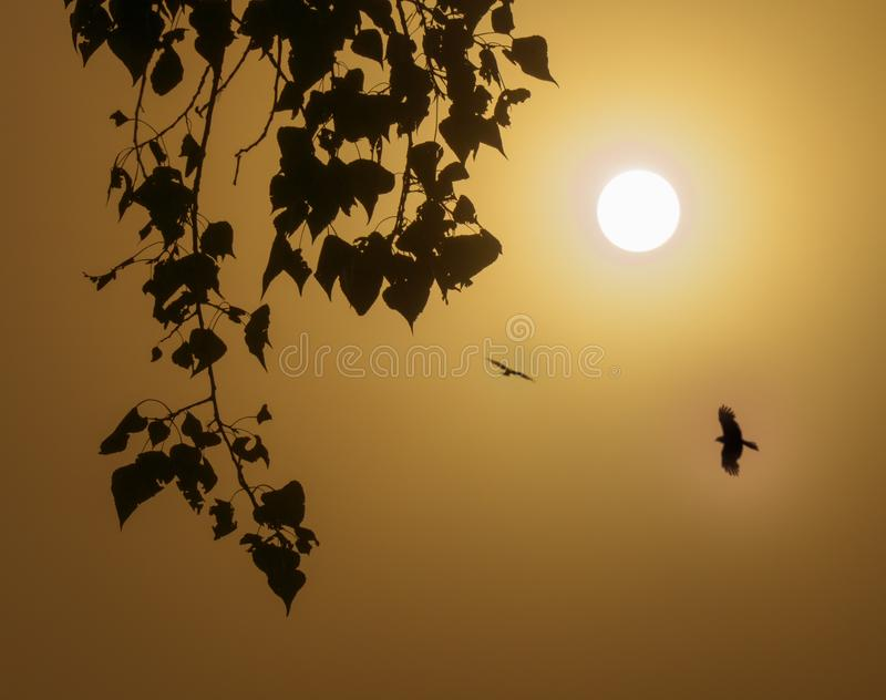 Foggy morning with the rising sun and birds flying high. Birch branches on a foggy morning with the rising sun and birds flying high stock photography