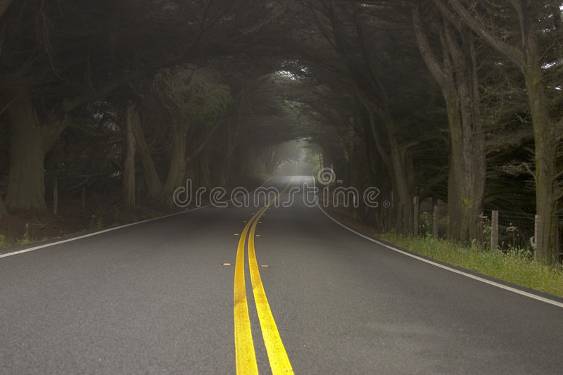 Download Foggy morning on the road stock image. Image of windy, lane - 183777