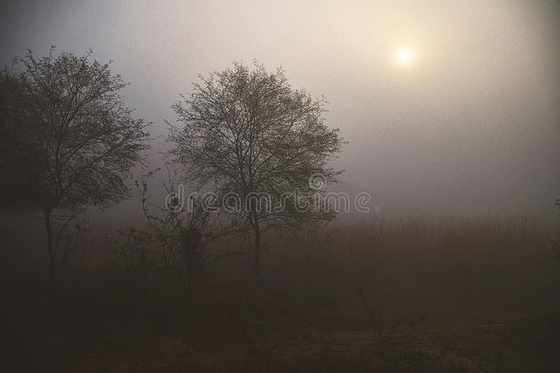 Foggy morning at sultanpur bird sanctuary. Sun in the foggy skies, very cold morning ,very poor visibility royalty free stock photography