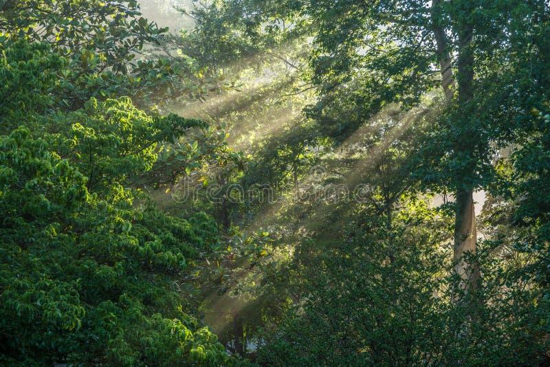 Foggy morning sun rays peeking through royalty free stock images