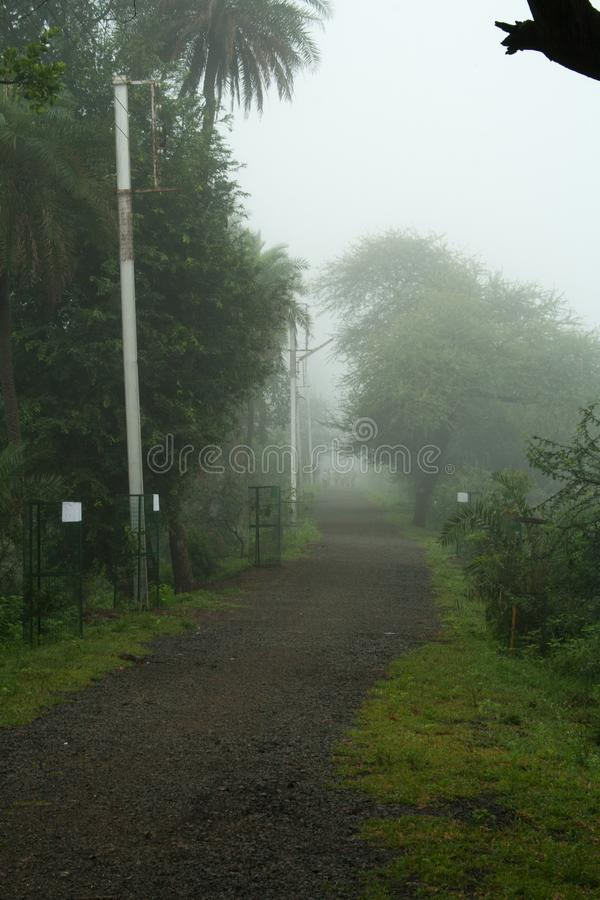 Foggy Morning on a walking track royalty free stock image