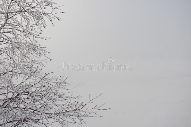White frost on tree twigs. Foggy morning, winter, snowy plain, white frost on tree twigs in the foreground stock image