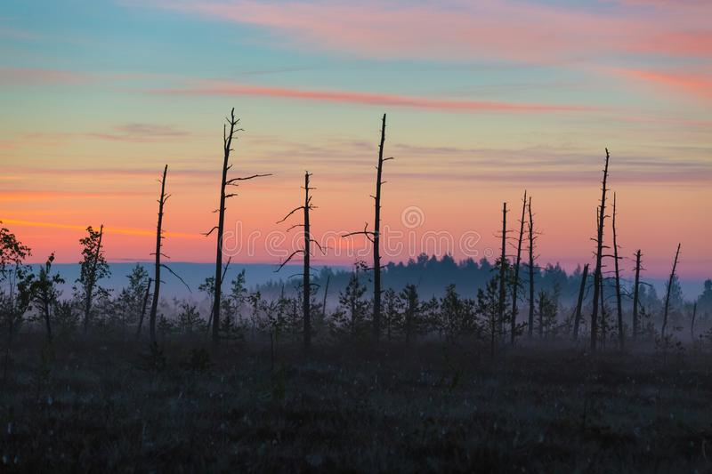 Swamp in the morning royalty free stock photo