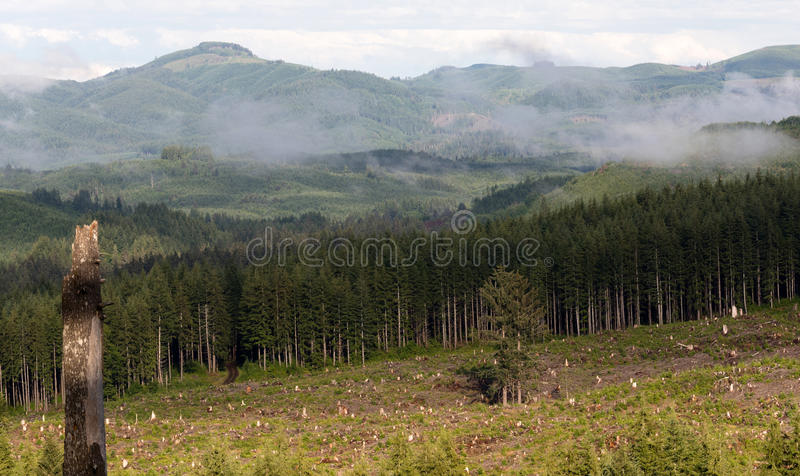 Foggy Mountain Clearcut Logging Effect Tree Stumps Deforestation. Two lone trees were left in the middle of a logging clearcut in the mountains royalty free stock images