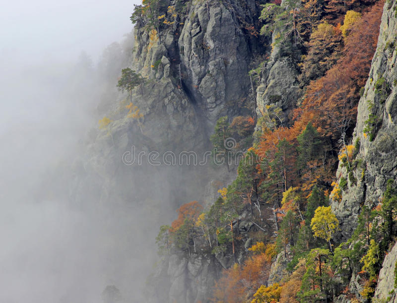 Foggy Mountain Forest. Foggy colored autumn forest in the mountains royalty free stock photo