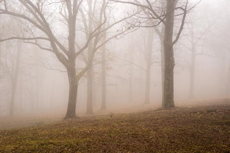 Foggy Mountain Trees. An abstract view of a foggy mountain forest located on the Blue Ridge Mountains, Roanoke County, Virginia, USA royalty free stock photography