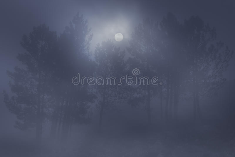 Foggy woods at night royalty free stock photo