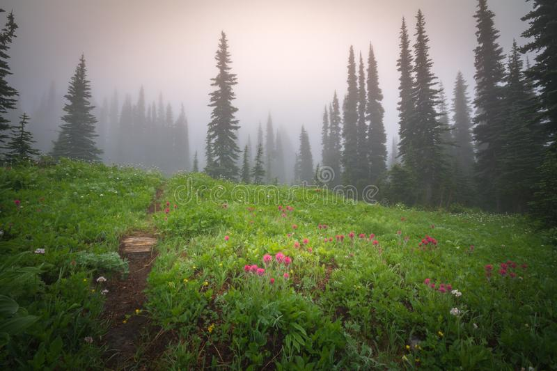 Foggy Mt. Rainier. This is a photograph of a foggy view in Mt. Rainier National Park royalty free stock photo