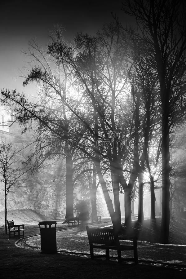 Download Foggy night in park stock image. Image of dusk, night - 37159261